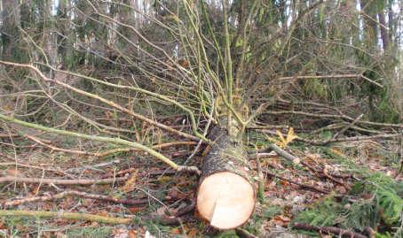 abattage arbres namur