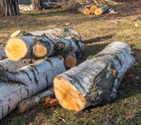 abattage arbre dangereux namur