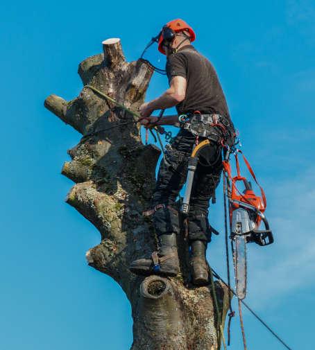 elagage et abattage arbres namur